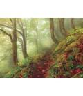 پازل 1000 تکه (Magic Forests Path)
